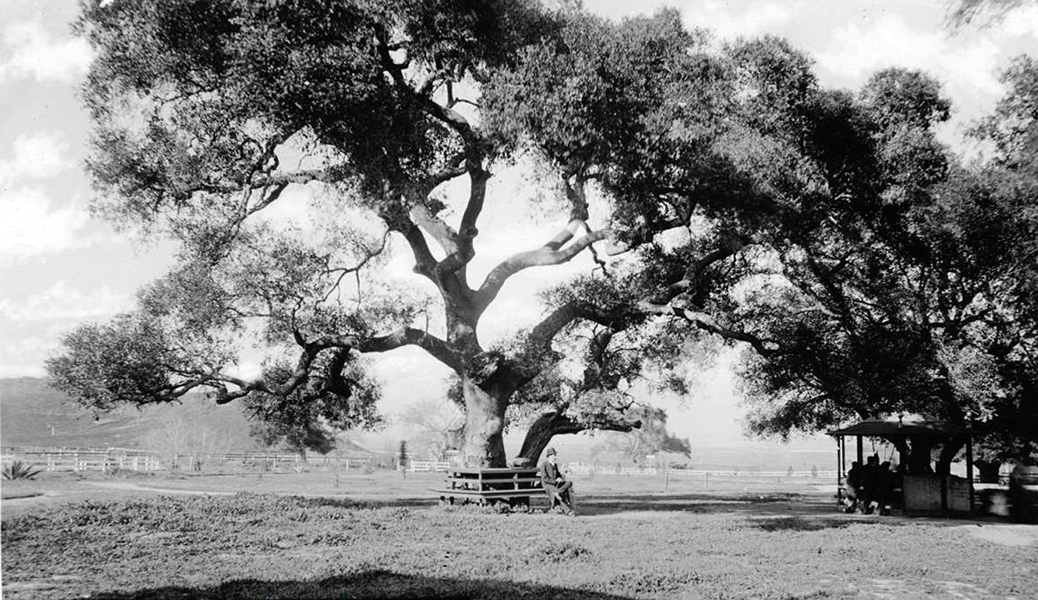 Photo of a man wearing a bowler hat sitting under a tall tree at Griffth Park was probably taken in 1898. (Bizarre Los Angeles)