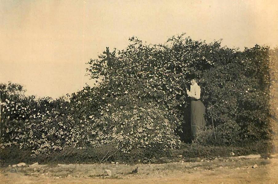 Pasadena 1901