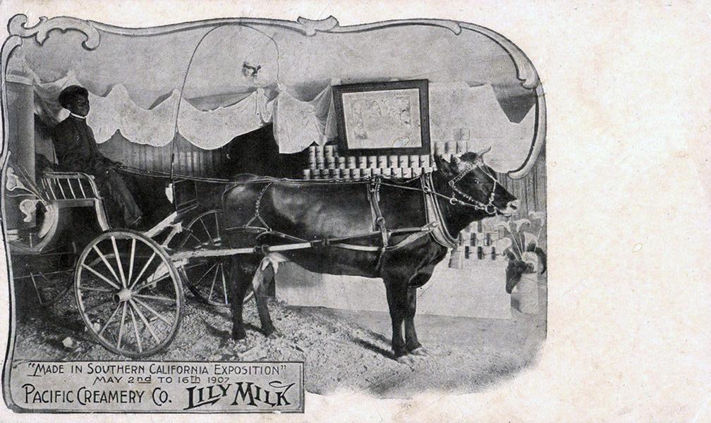 1907 - PACIFIC CREAMERY CO. LILY MILK