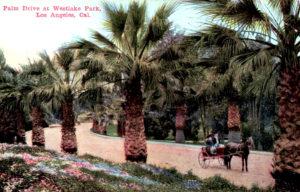 Palm Drive Westlake Park