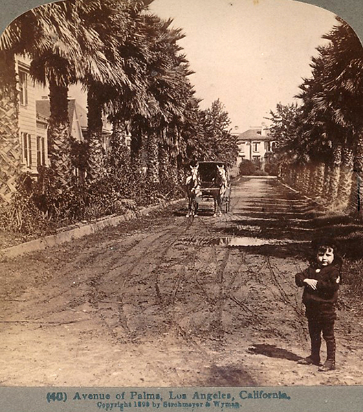 Avenue of the palms early Los Angeles 1898
