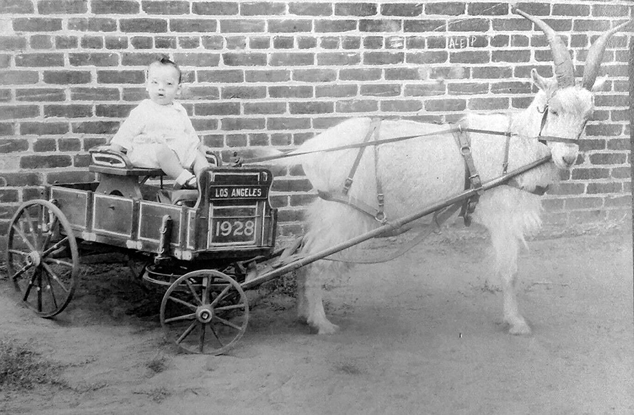 Somewhere in Los Angeles, a small child poses in a wagon with a goat, c. 1928. (Bizarre Los Angeles)