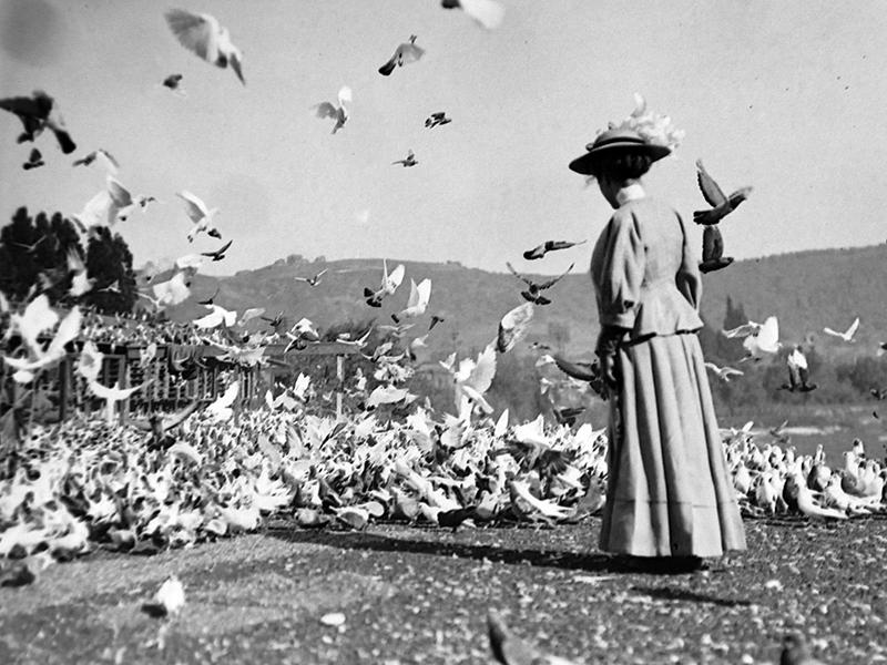 Los Angeles Pigeon Farm
