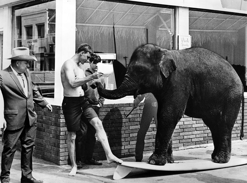 Bimbo, Jr., a star of the De Wayne Bros. Circus at Pacific Ocean Park, poses on water-skis at Santa Monica Beach on April 28, 1962. The elephant was trained to surf. (LAPL) Bizarre Los Angeles