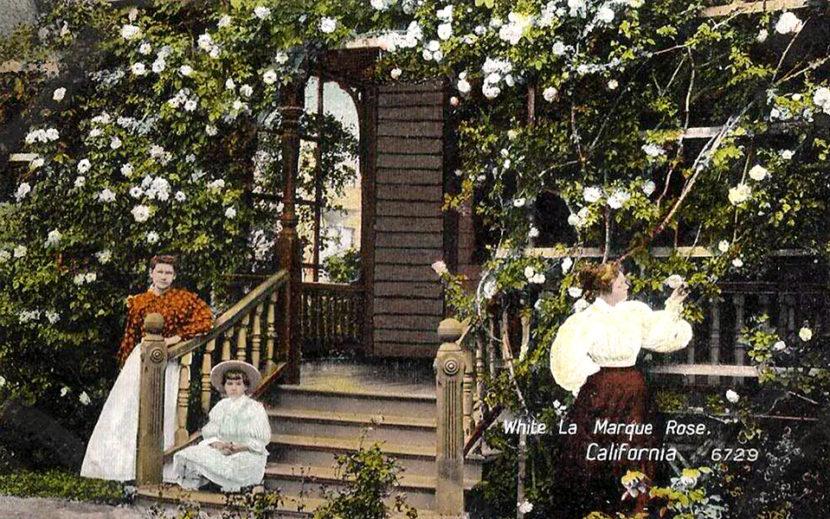 Los Angeles flowers home garden 1909