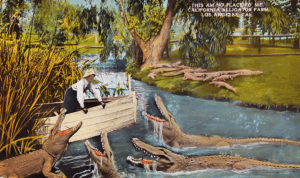 Alligator Farm 1910s