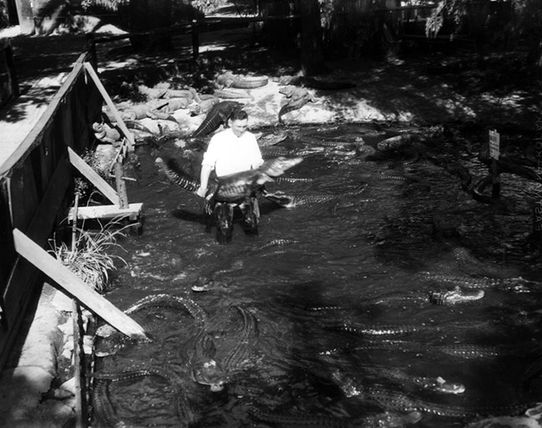 Kind of scary if you ask me. This undated photo was taken at the Alligator Farm in Los Angeles. Bizarre Los Angeles.