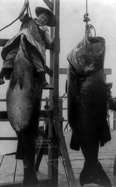 Boy jew fish 1909