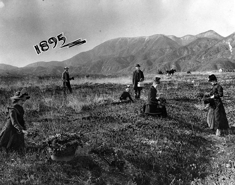 Altadena 1895