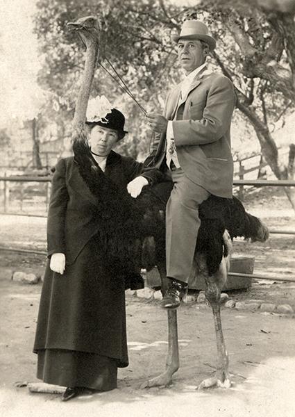 Los Angeles Ostrich Farm 1914