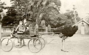 Los Angeles Ostrich Farm 1915