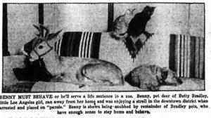 Bennie the Deer on parole