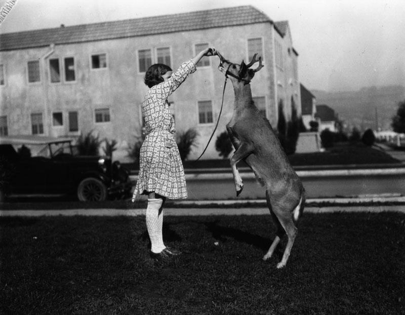 feeding pet deer
