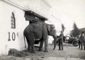 Selig Zoo Elephant
