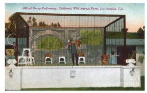 Selig Zoo postcard 1915