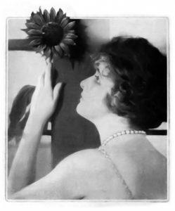 Olive Tell sunflower