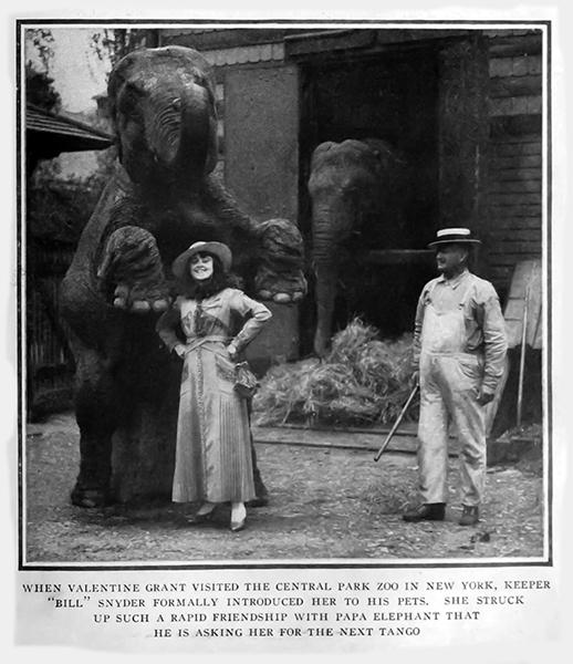 Valentine Grant elephant