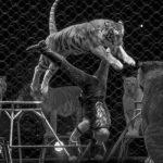 Tiger Trainer Craig Owens circus