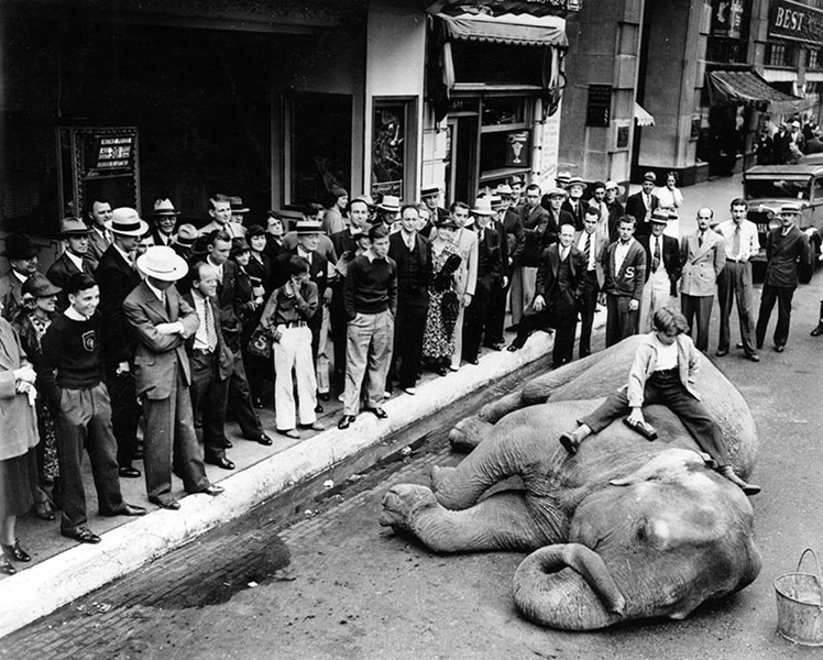 An elephant with the Clyde Beatty Circus gets a wash from Teddy Metcalfe near the intersection of Grand and Wilshire, circa May of 1937. (LAPL) Bizarre Los Angeles