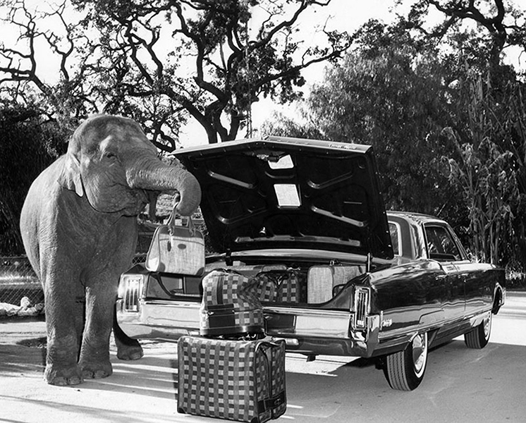 Bimbo the elephant loading a trunk with his trunk in 1965. (LAPL) Bizarre Los Angeles