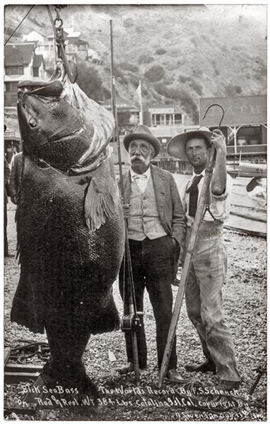 Catalina Island Sea Bass 1900