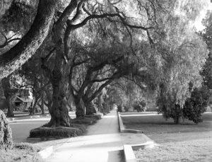 Marengo Avenue in Pasadena, circa 1910. Photographer: H.C. Tibbetts. (Bizarre Los Angeles)