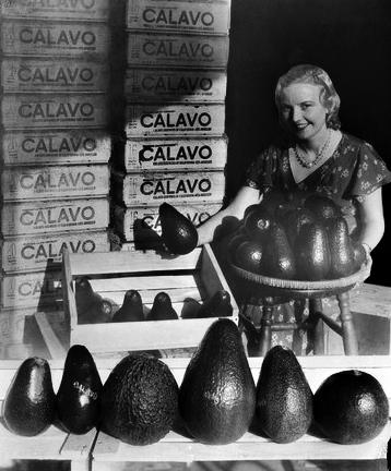 May Betteridge avocados