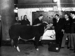 Alexandria Hotel livestock show